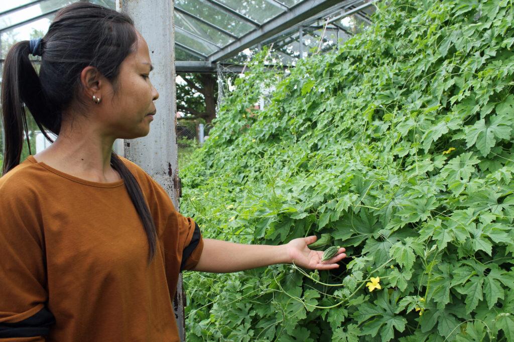 Sarita Porsche pflanzte das asiatische Gemüse erst nur für den Eigenbedarf an.