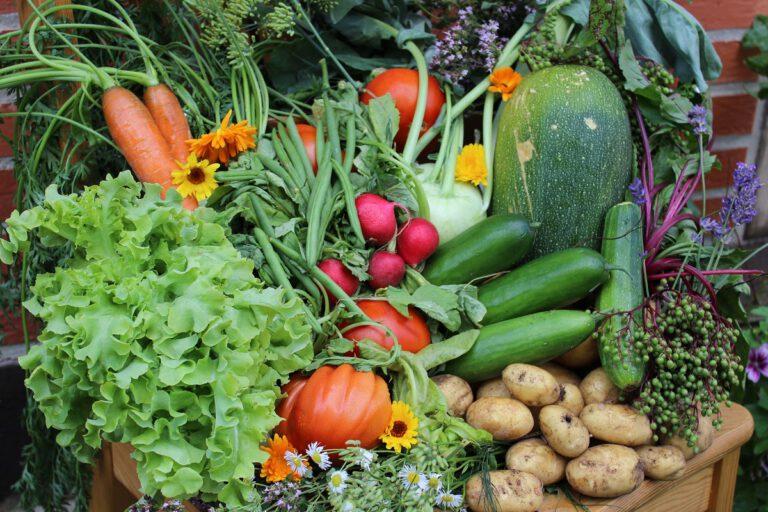Gemüse von der Solawi Klein Trebbow jetzt auch im Kulturquartier Neustrelitz